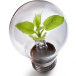 Green Bulb